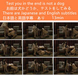 Are you looking to test whether or not dogs